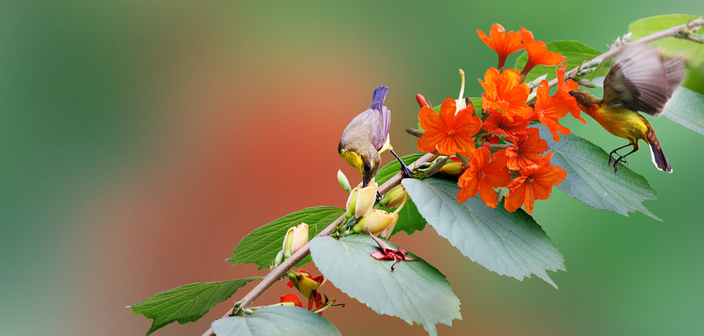 Picture of spring - birds drinking nectar